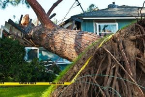 tree that has fallen on a house
