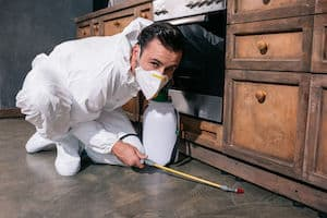 what to expect during pest control