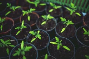 How Far Should Plants Be From a House? Read Before Planting