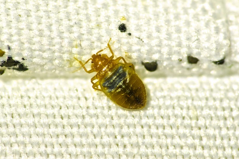Eliminating Bed Bugs