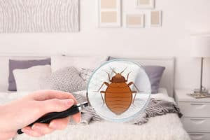 finding bed bugs before treating