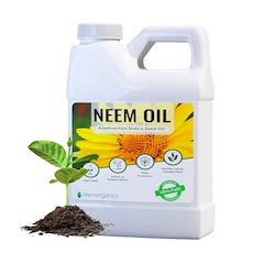 neem oil to kill bed bugs