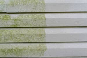 cleaning algae from siding