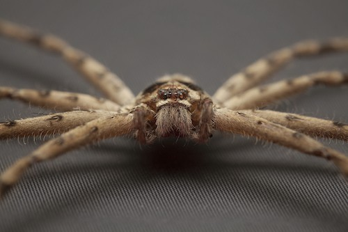 get spider out of basement