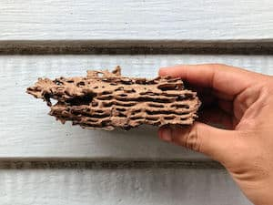 what are termite mud tubes