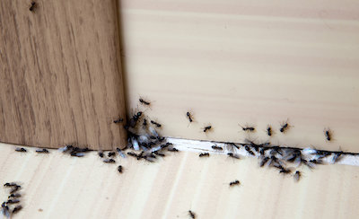 Types of Bugs in Basement