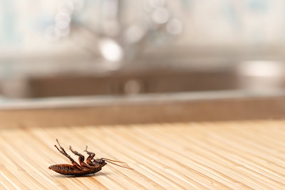 Get Rid of Cockroaches